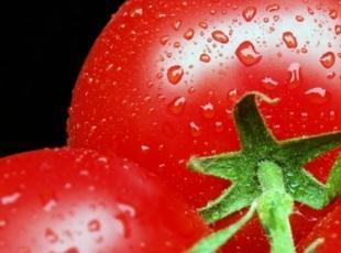 Tomato Pudding Recipe