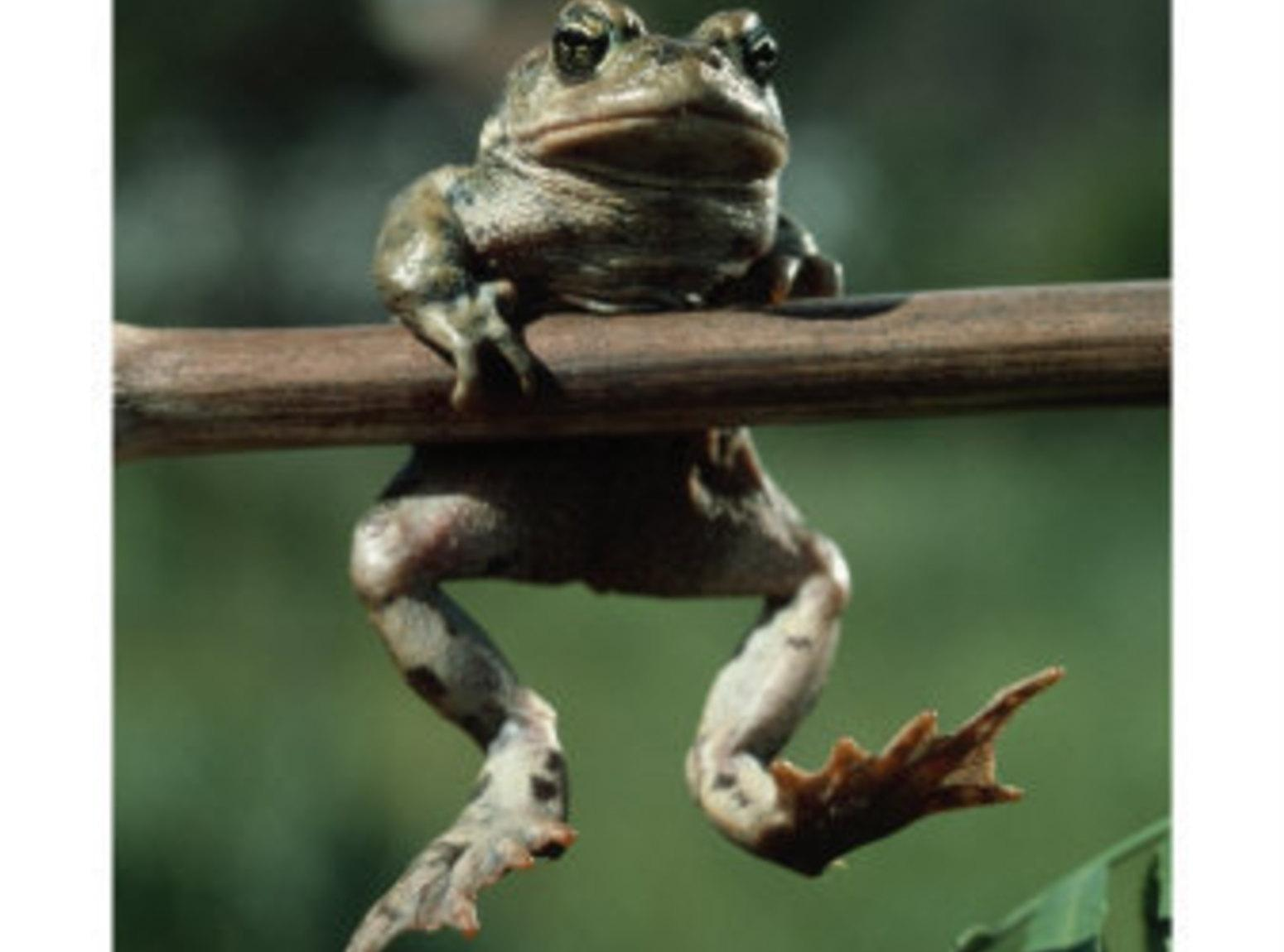 A frog with legs spread and pussy ready for cock 5