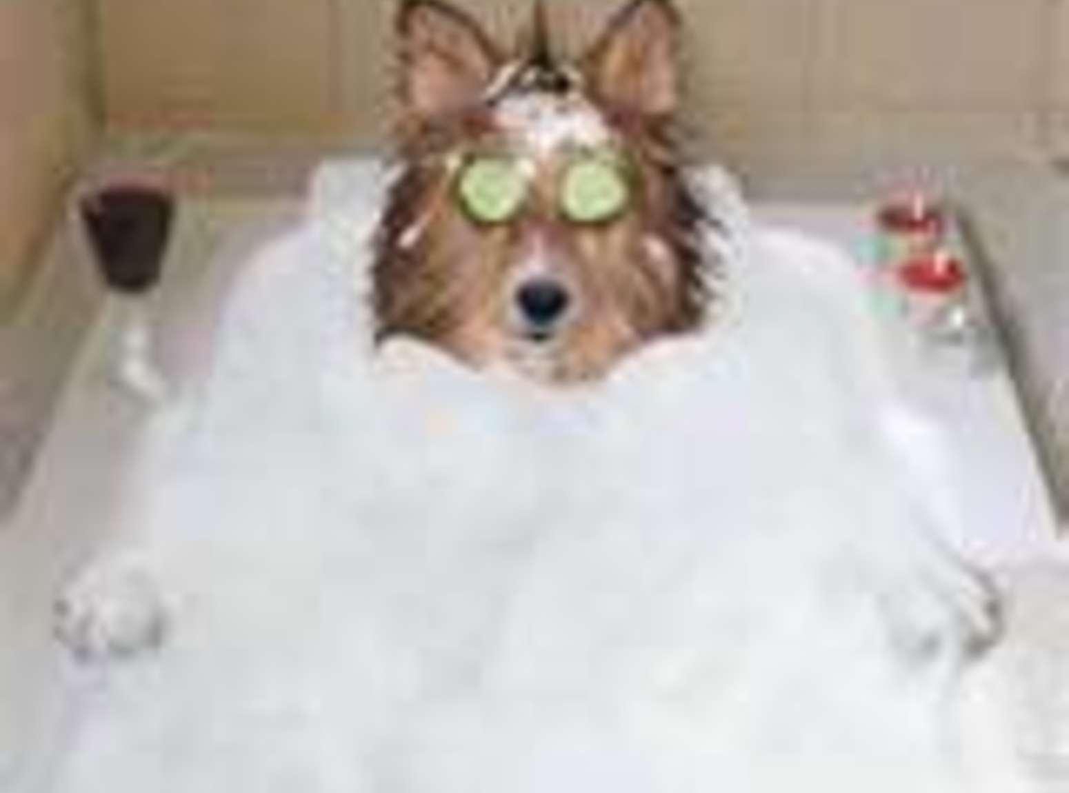 Homemade Flea Shampoo: Recipe
