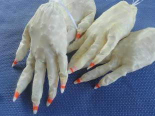 Witch's Hands !