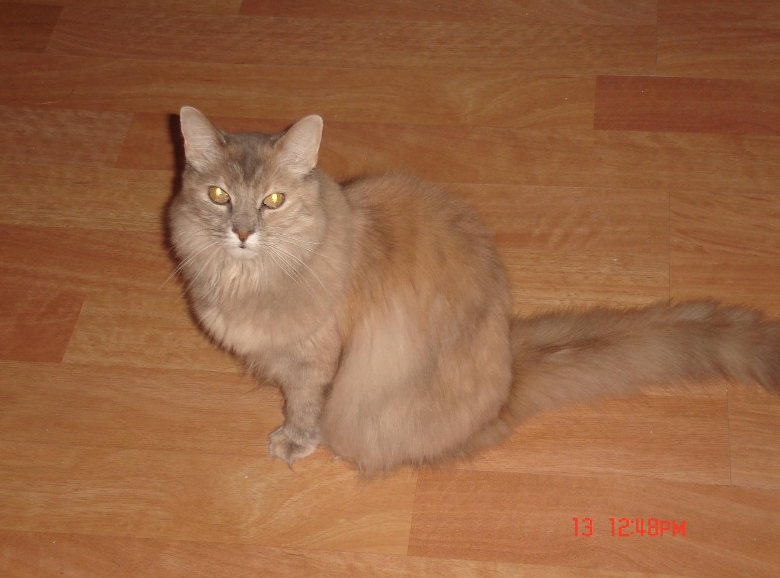 Cat Tuna Crackers Recipe | Just A Pinch Recipes - photo#46