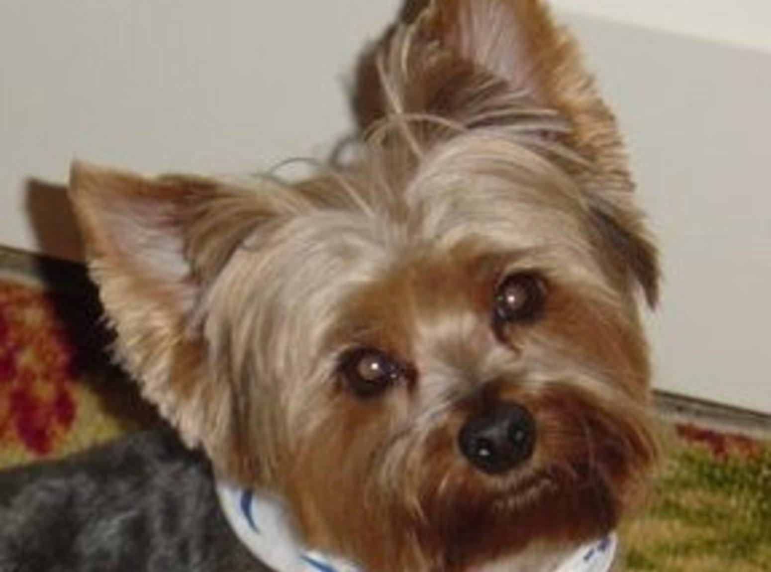 Flea Eliminator Dog Treats Recipe
