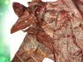 HOMEMADE CHICKEN JERKEY BY EDDIE